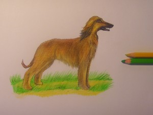 собака карандашом поэтапно