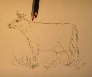 корова карандашом