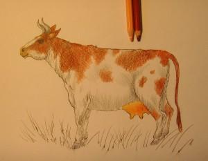 рисунок коровы