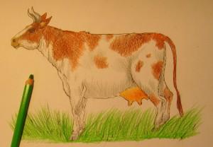 как нарисовать корову поэтапно