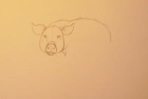 как нарисовать поросенка карандашом поэтапно