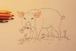 нарисовать поросенка карандашом