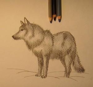 рисунок волка