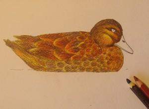 рисунок утки