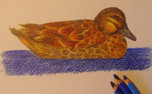 утка нарисованная карандашом
