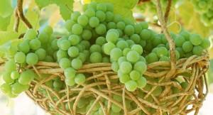 виноград детям можно