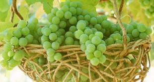 виноград детям 1