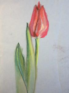рисуем тюльпан пастелью