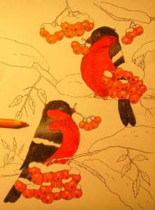 как нарисовать снегиря на ветке