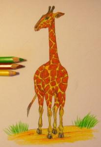 нарисовать жирафа поэтапно