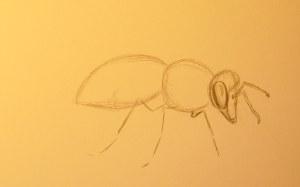 нарисовать пчелу карандашом