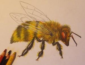 нарисовать пчелу поэтапно