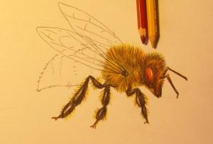 нарисовать пчелу ребенку