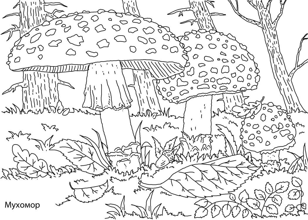 Раскраски грибы | раскраски для детей | Мой Малыш