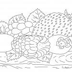 Раскраска лесные ягоды