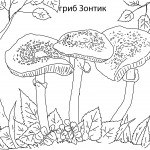 Раскраски гриб зонтик