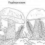 4подберезовик