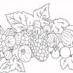 Раскраска садовые ягоды