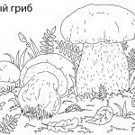 5белый гриб