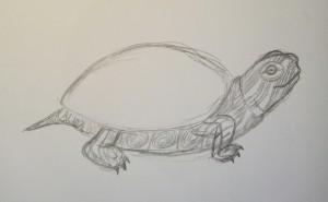 как нарисовать черепаху карандашом поэтапно