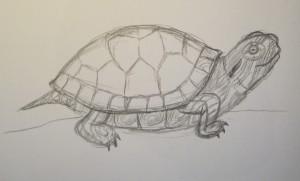 как рисовать черепаху