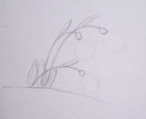 как нарисовать подснежники карандашом