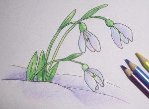 как нарисовать подснежники поэтапно карандашом
