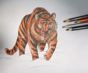 kak_narisovat_tigra10