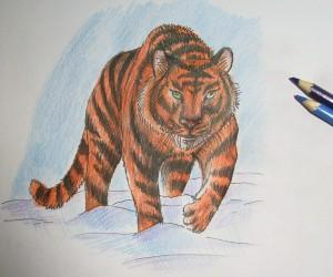 kak_narisovat_tigra11