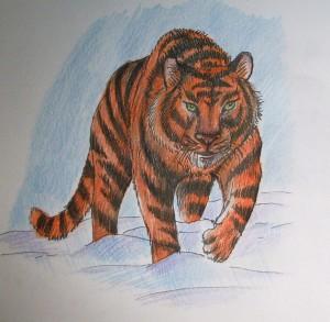 kak_narisovat_tigra12