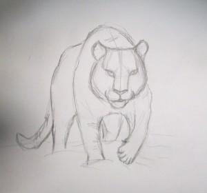 kak_narisovat_tigra5