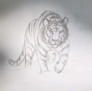 kak_narisovat_tigra6