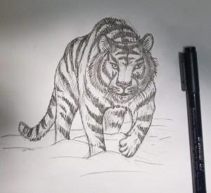 kak_narisovat_tigra7