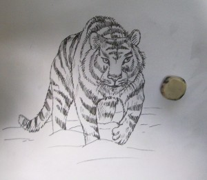 kak_narisovat_tigra8