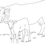 раскраски животные
