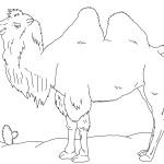 раскраски животные для детей