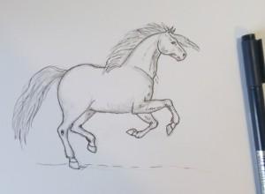 как нарисовать коня карандашом