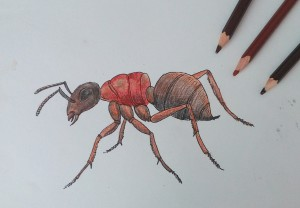 как нарисовать муравья карандашом поэтапно