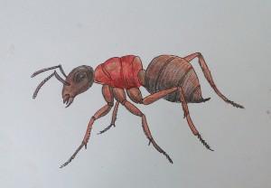 как нарисовать муравья