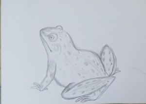 как нарисовать лягушку карандашом