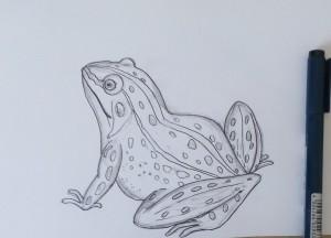 как нарисовать лягушку карандашом поэтапно