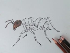рисунок муравья