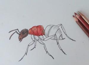 нарисовать муравья поэтапно