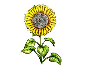 нарисовать растение