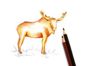 как нарисовать лося поэтапно