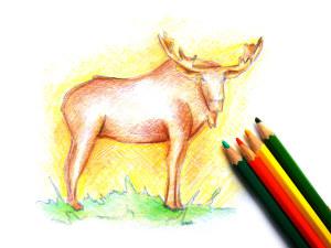 нарисовать лося карандашом поэтапно