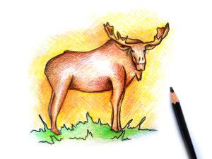 рисунок лося