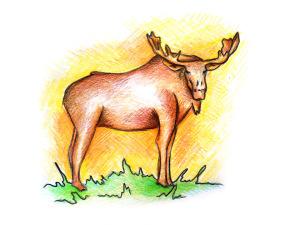 как нарисовать лося